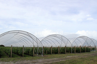Multi-Bay Poly Tunnel Hoop Haus
