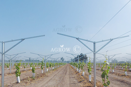 Vineyard Flat Gable Spaliersystem